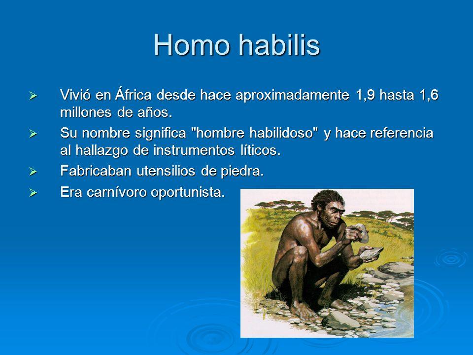 Homo habilis Vivió en África desde hace aproximadamente 1,9 hasta 1,6 millones de años.