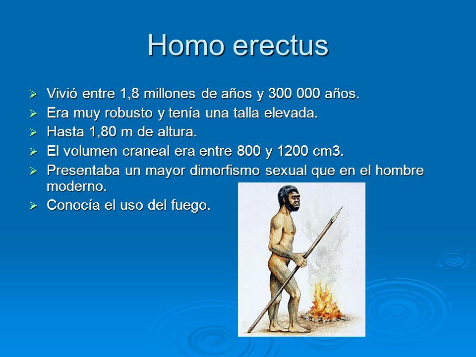 Homo erectus Vivió entre 1,8 millones de años y 300 000 años.
