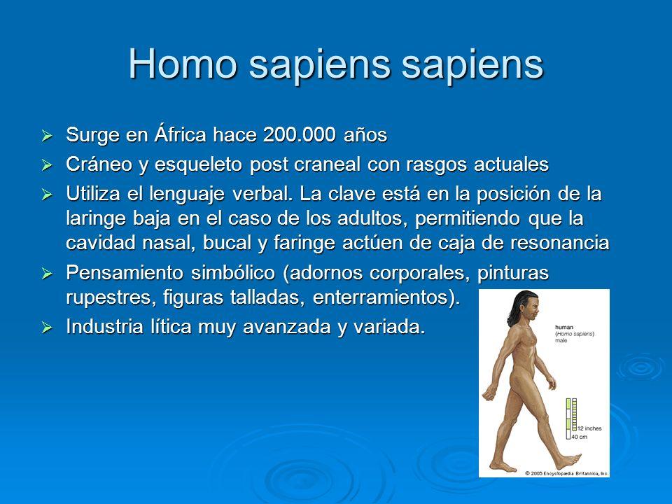 Homo sapiens sapiens Surge en África hace 200.000 años