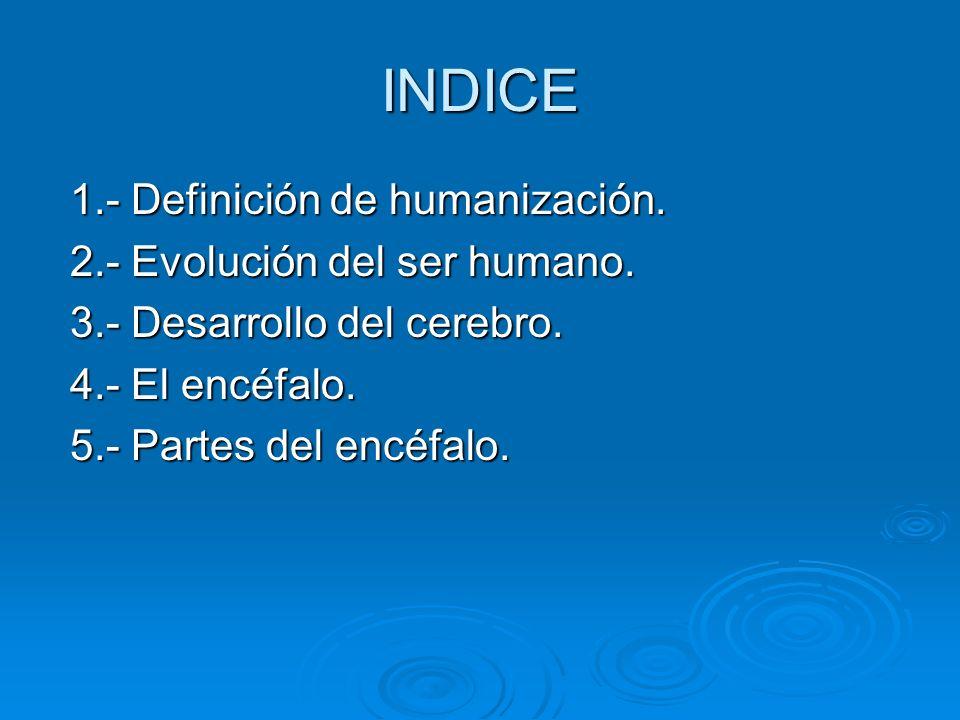 INDICE 1.- Definición de humanización. 2.- Evolución del ser humano.