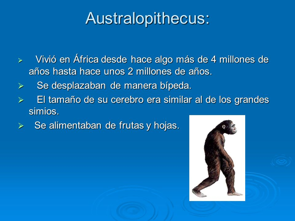 Australopithecus: Se desplazaban de manera bípeda.