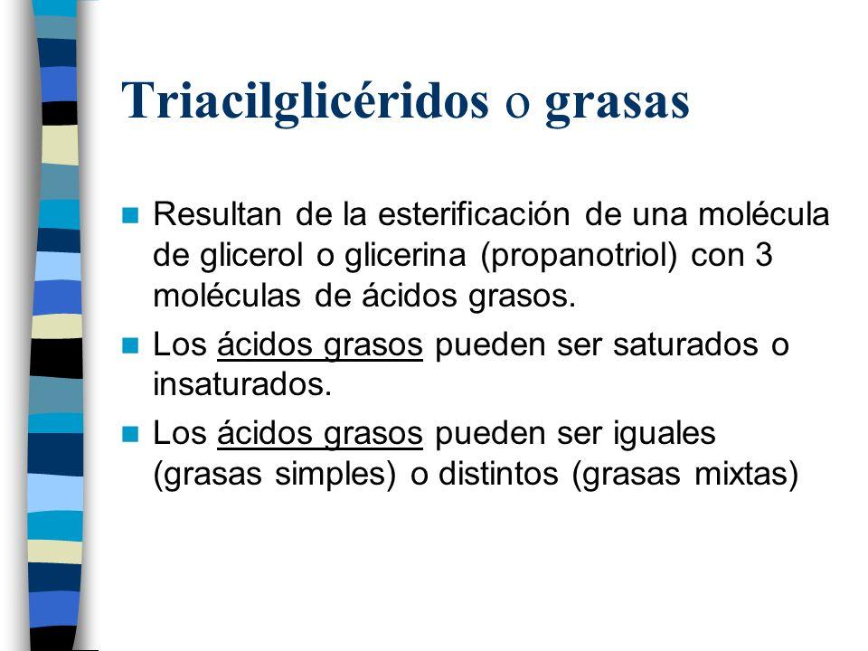 Triacilglicéridos o grasas