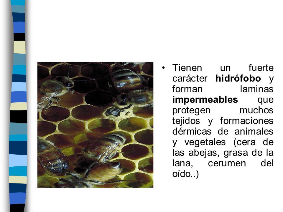 Tienen un fuerte carácter hidrófobo y forman laminas impermeables que protegen muchos tejidos y formaciones dérmicas de animales y vegetales (cera de las abejas, grasa de la lana, cerumen del oído..)