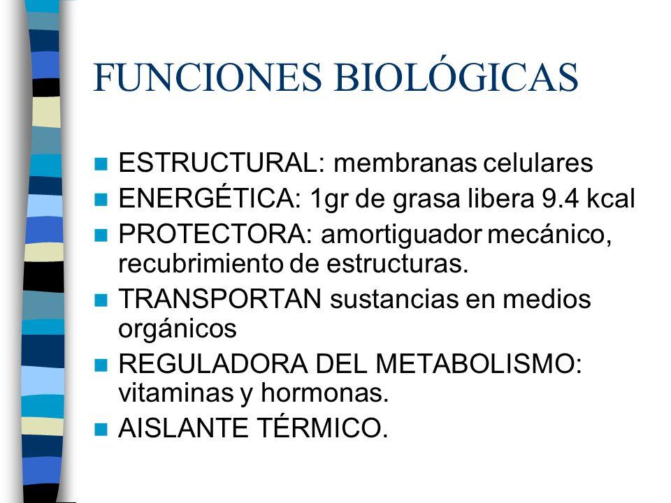 FUNCIONES BIOLÓGICAS ESTRUCTURAL: membranas celulares