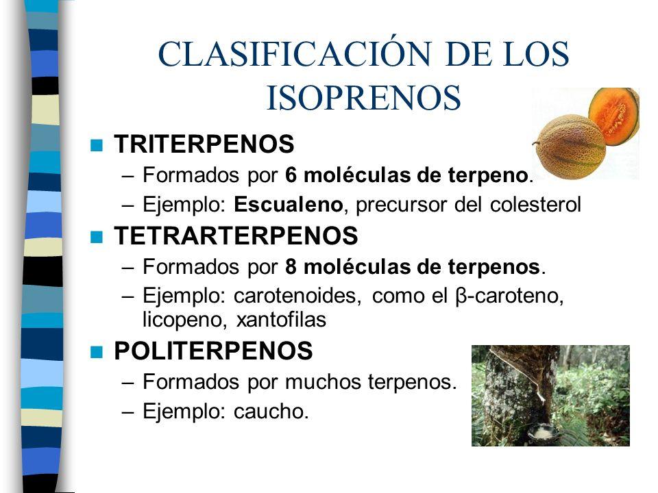 CLASIFICACIÓN DE LOS ISOPRENOS