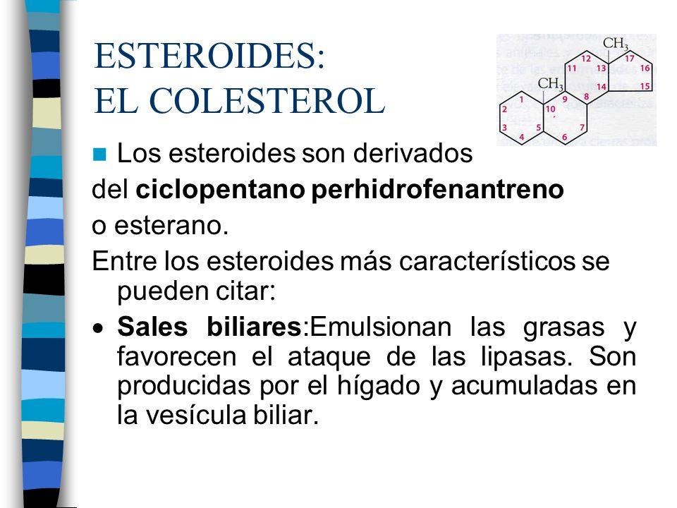 ESTEROIDES: EL COLESTEROL