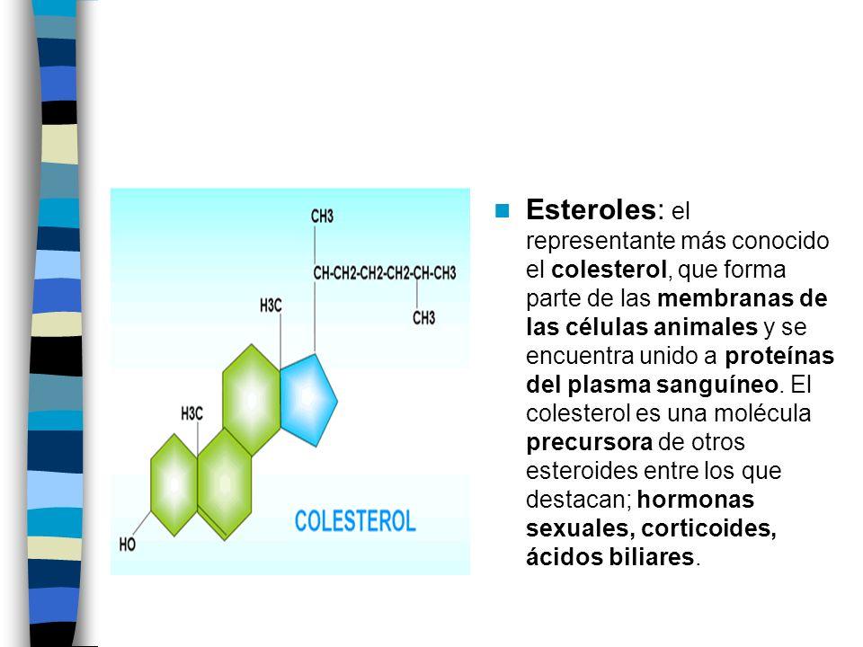Esteroles: el representante más conocido el colesterol, que forma parte de las membranas de las células animales y se encuentra unido a proteínas del plasma sanguíneo.