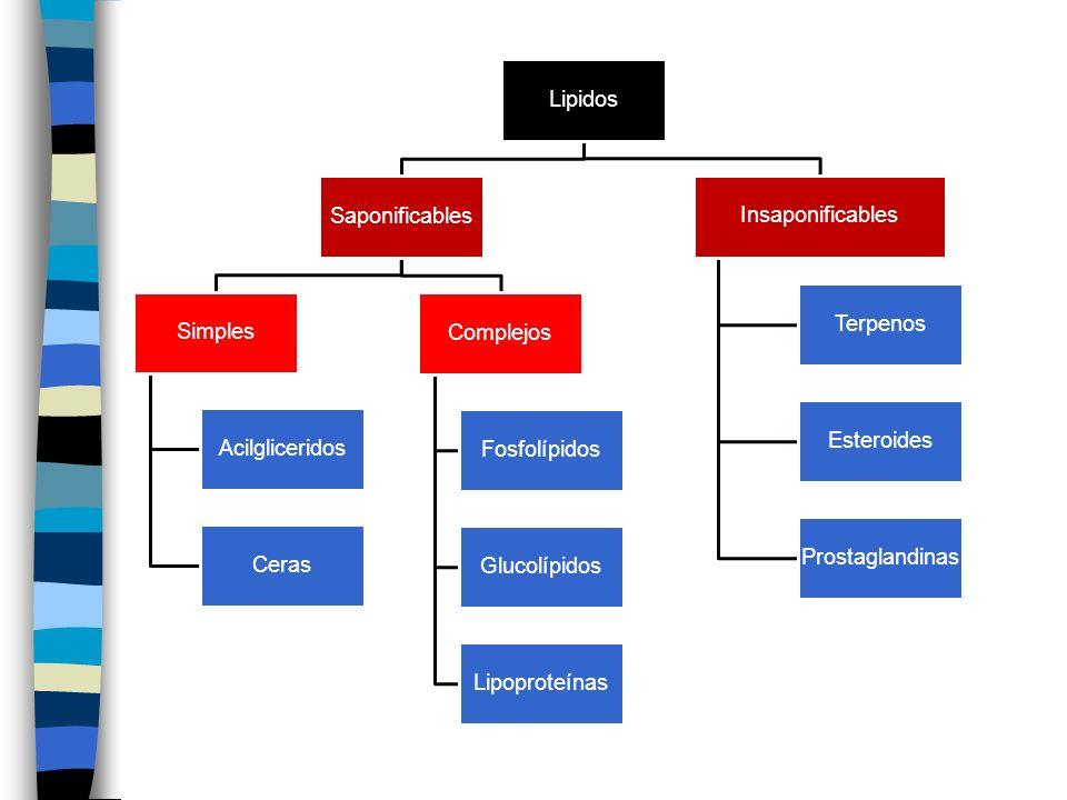 Lipidos Saponificables. Simples. Acilgliceridos. Ceras. Complejos. Fosfolípidos. Glucolípidos.