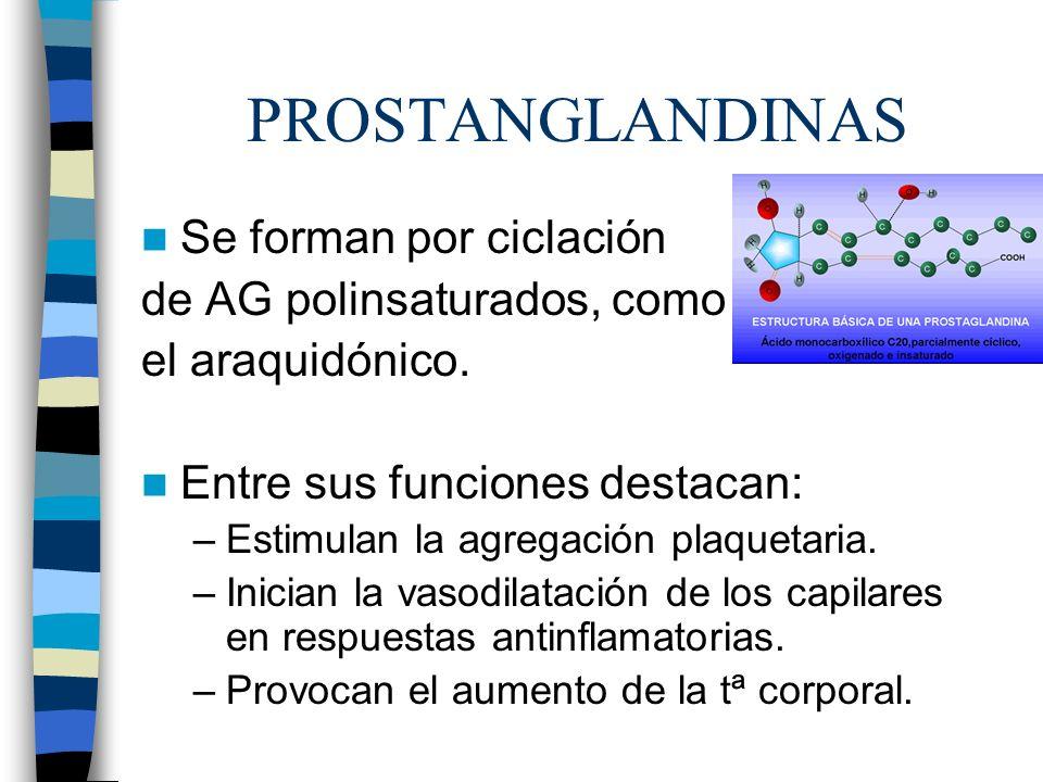 PROSTANGLANDINAS Se forman por ciclación de AG polinsaturados, como
