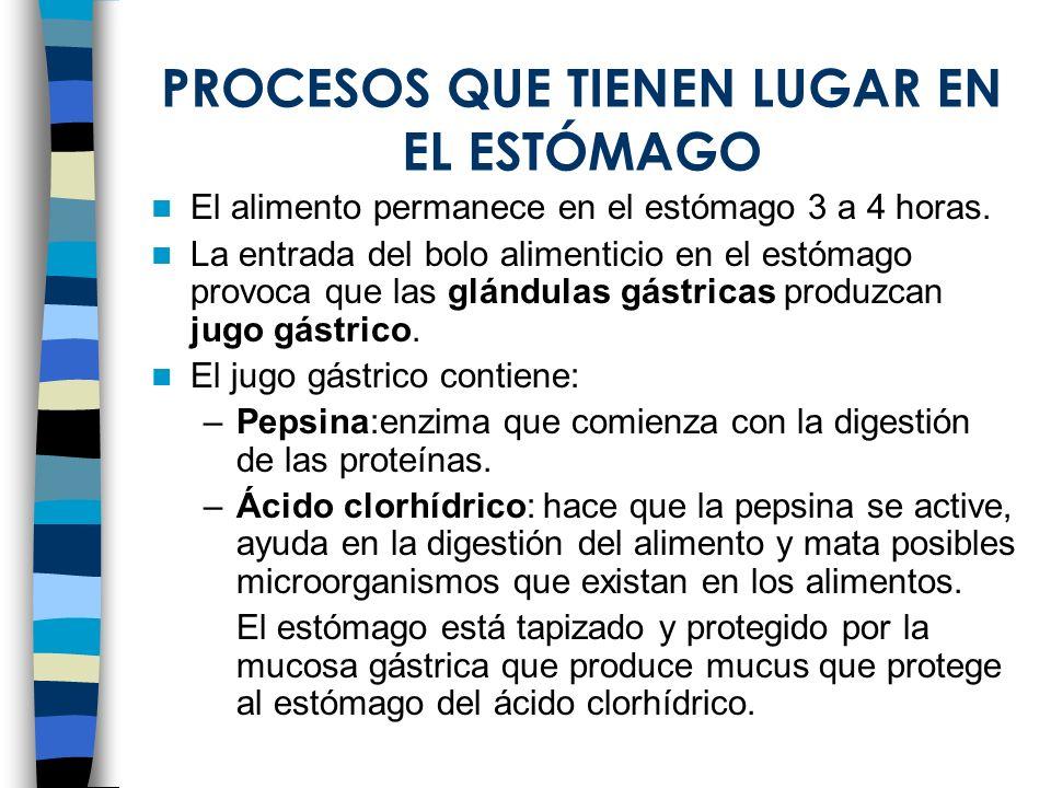 PROCESOS QUE TIENEN LUGAR EN EL ESTÓMAGO