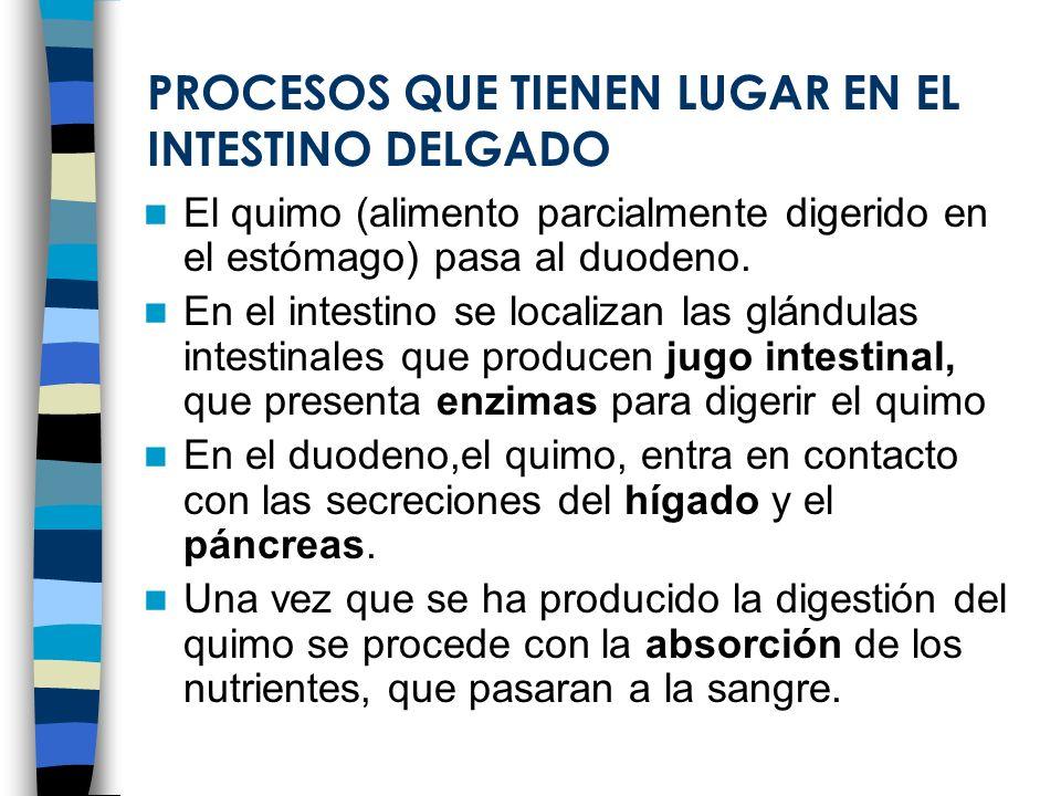 PROCESOS QUE TIENEN LUGAR EN EL INTESTINO DELGADO
