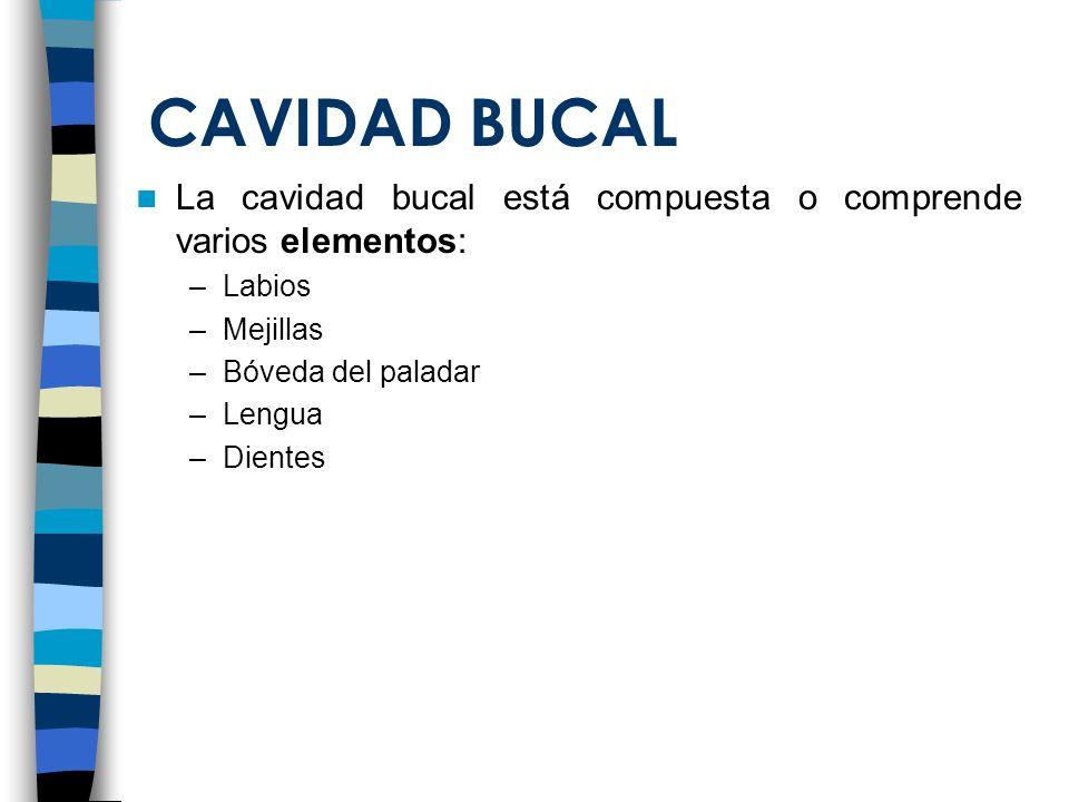 CAVIDAD BUCAL La cavidad bucal está compuesta o comprende varios elementos: Labios. Mejillas. Bóveda del paladar.