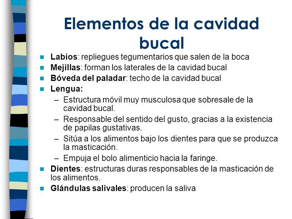 Elementos de la cavidad bucal