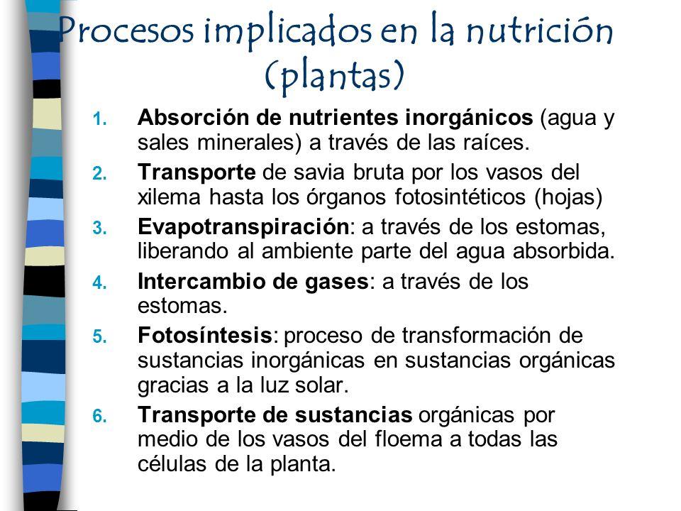 Procesos implicados en la nutrición (plantas)
