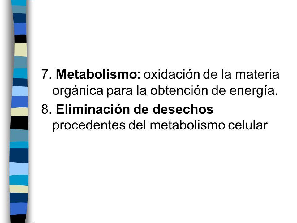 7. Metabolismo: oxidación de la materia orgánica para la obtención de energía.