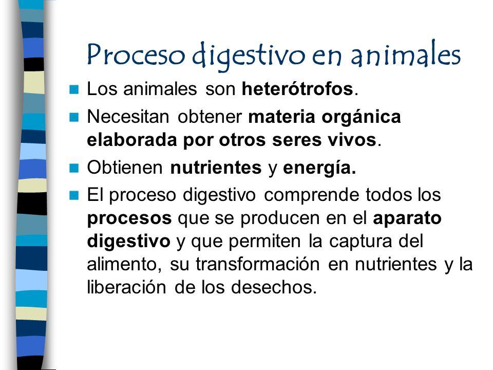 Proceso digestivo en animales