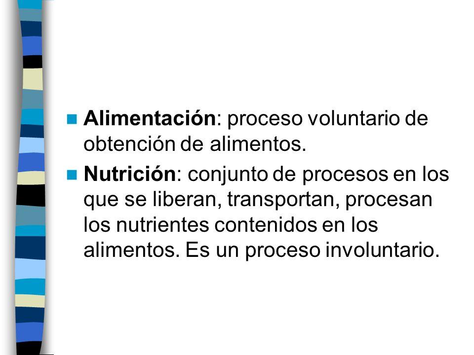 Alimentación: proceso voluntario de obtención de alimentos.
