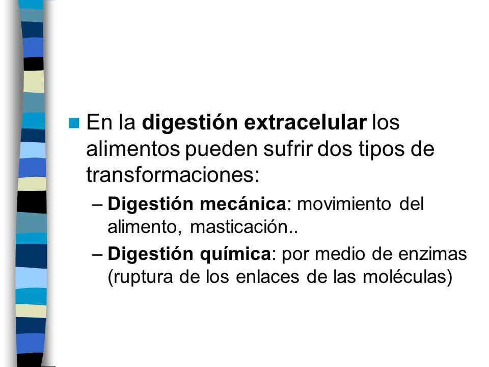 En la digestión extracelular los alimentos pueden sufrir dos tipos de transformaciones: