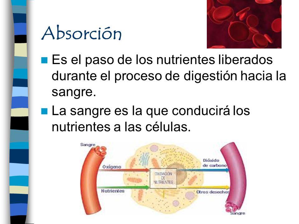 Absorción Es el paso de los nutrientes liberados durante el proceso de digestión hacia la sangre.