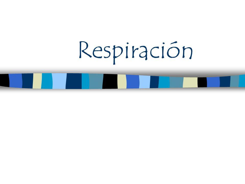Respiración