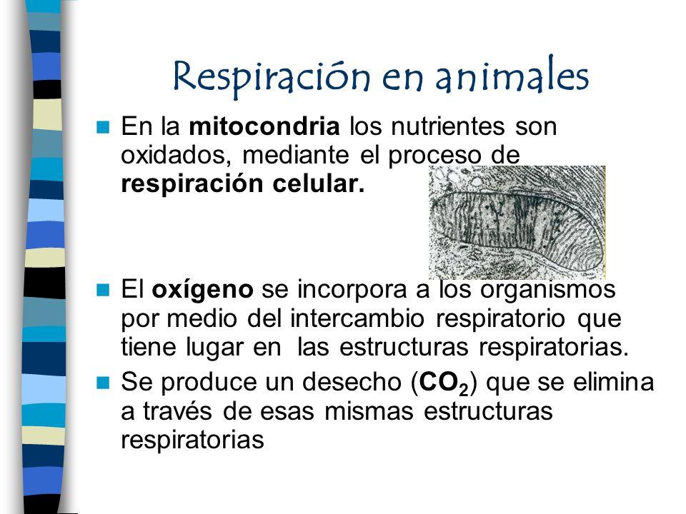 Respiración en animales