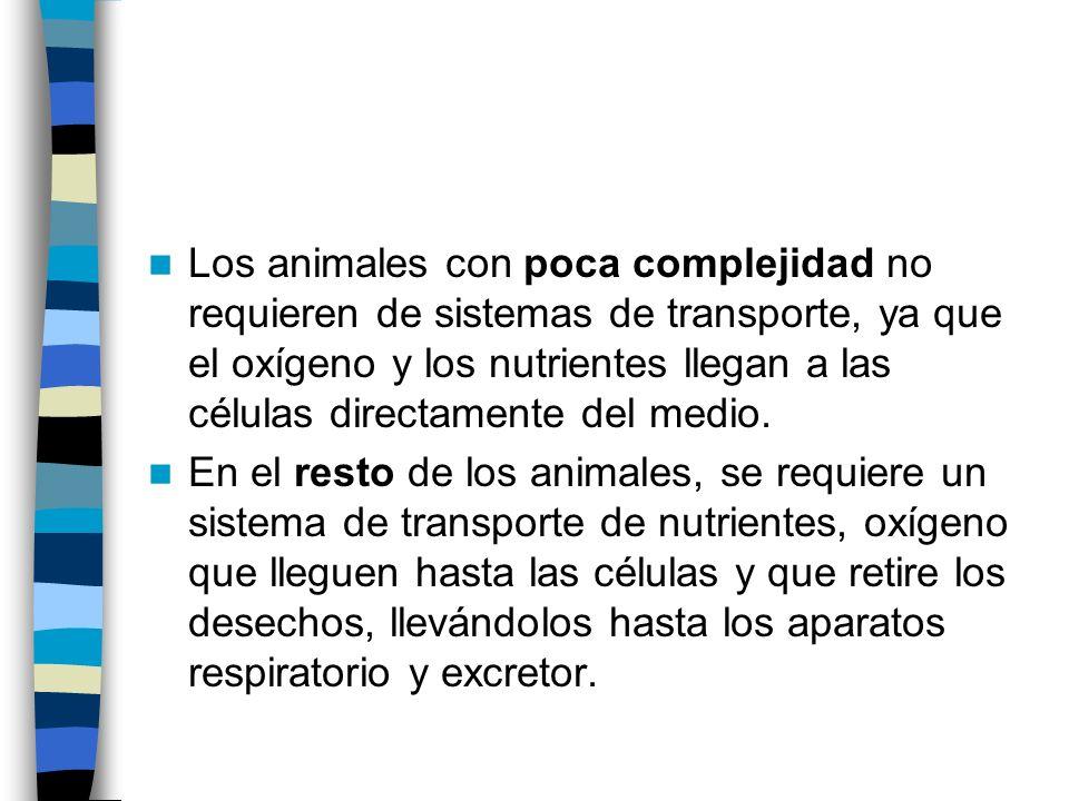 Los animales con poca complejidad no requieren de sistemas de transporte, ya que el oxígeno y los nutrientes llegan a las células directamente del medio.