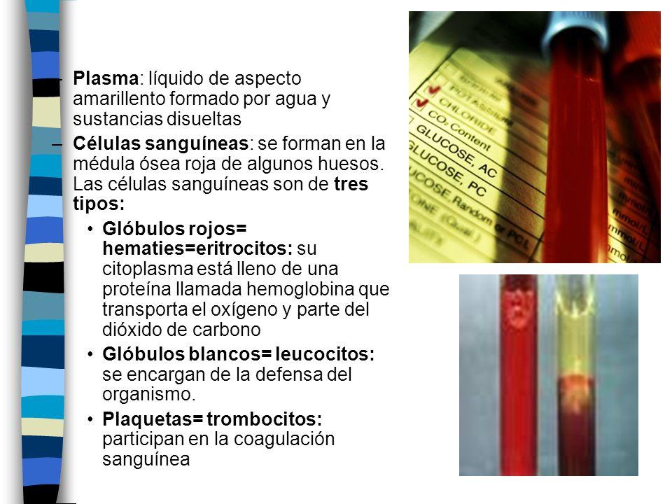 Plasma: líquido de aspecto amarillento formado por agua y sustancias disueltas