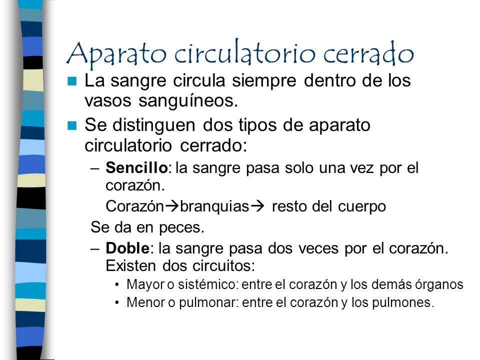 Aparato circulatorio cerrado