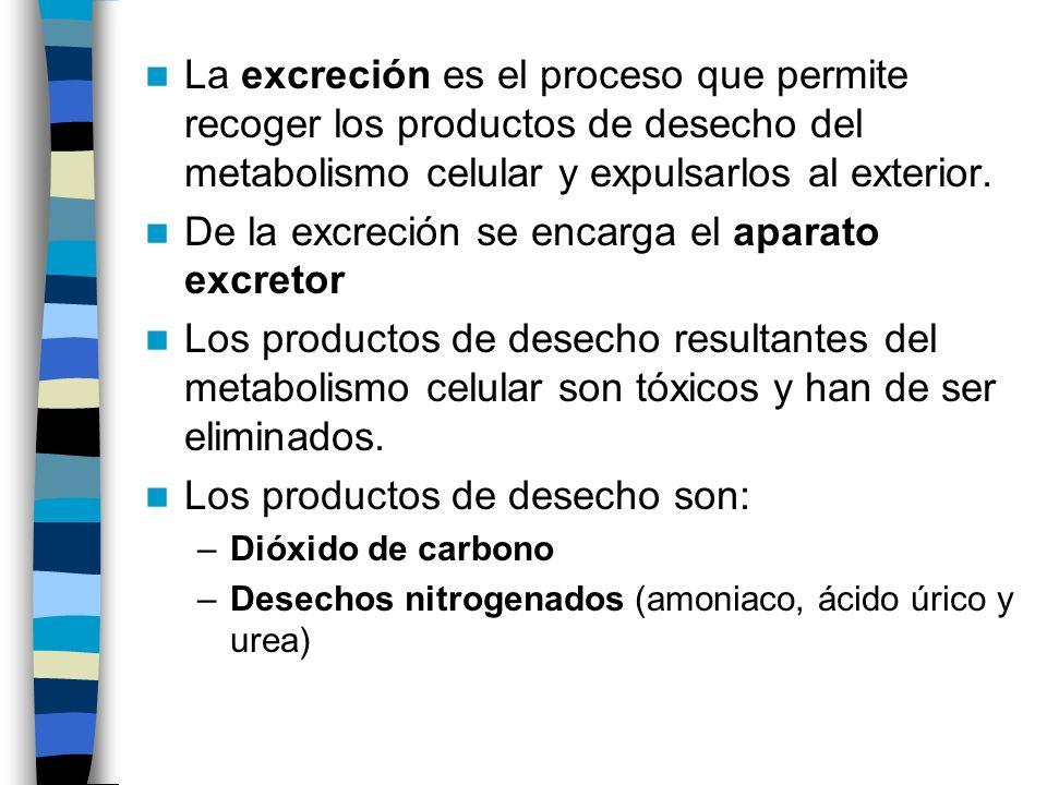 De la excreción se encarga el aparato excretor