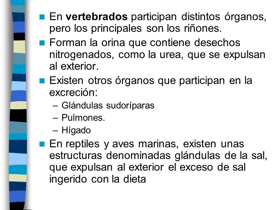 Existen otros órganos que participan en la excreción: