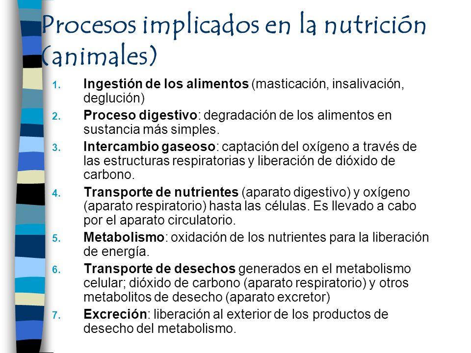 Procesos implicados en la nutrición (animales)
