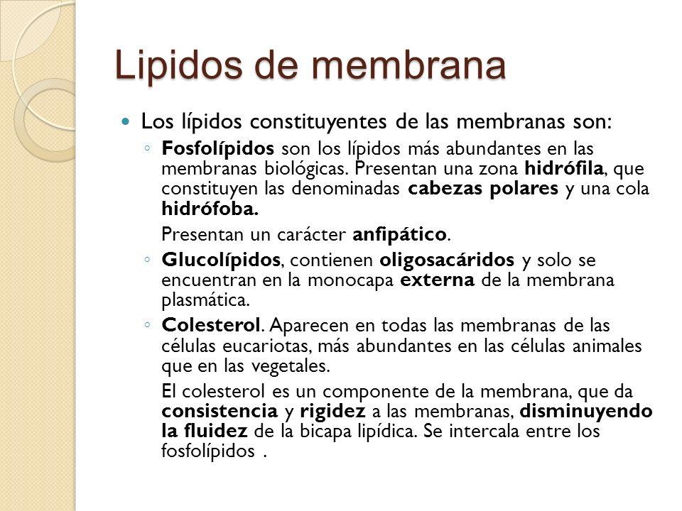Lipidos de membrana Los lípidos constituyentes de las membranas son: