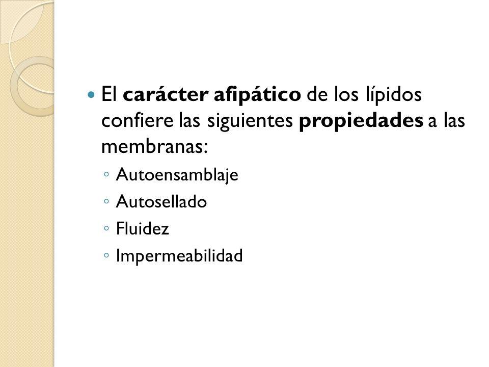 El carácter afipático de los lípidos confiere las siguientes propiedades a las membranas: