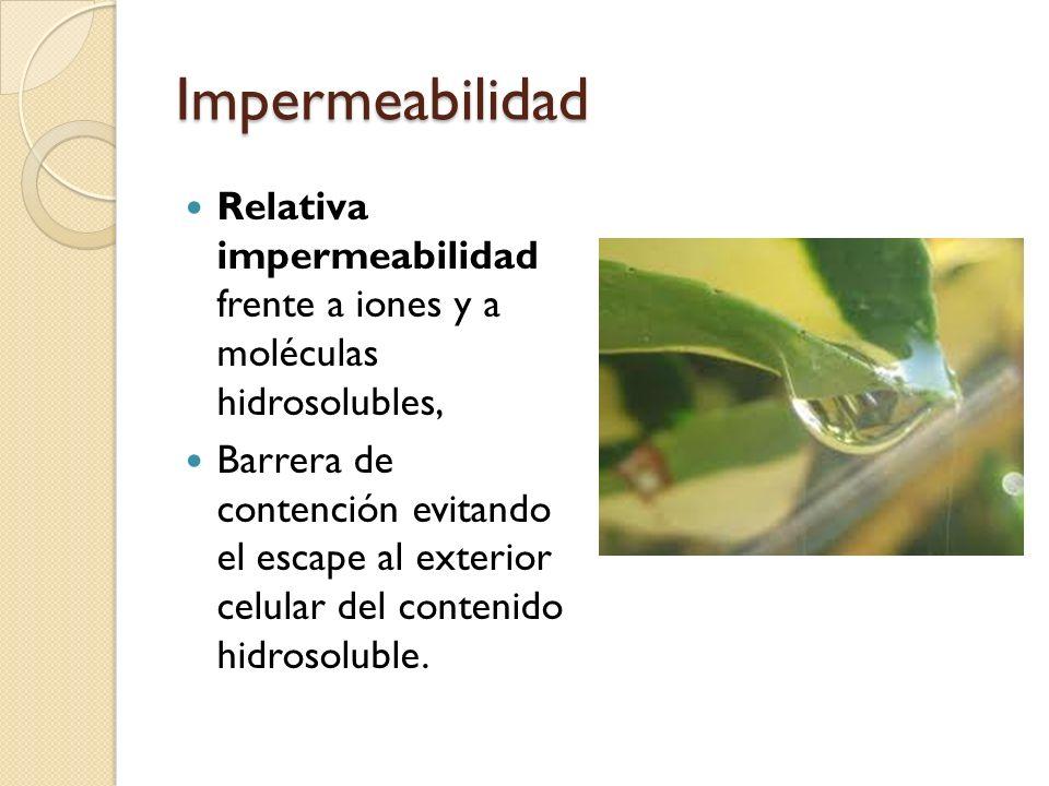 Impermeabilidad Relativa impermeabilidad frente a iones y a moléculas hidrosolubles,