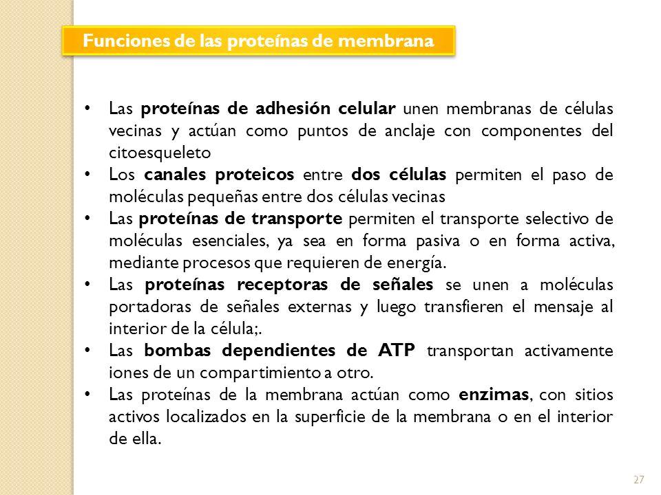 Funciones de las proteínas de membrana