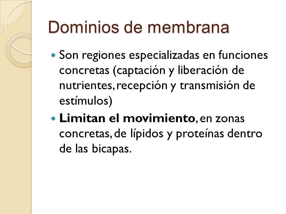 Dominios de membrana