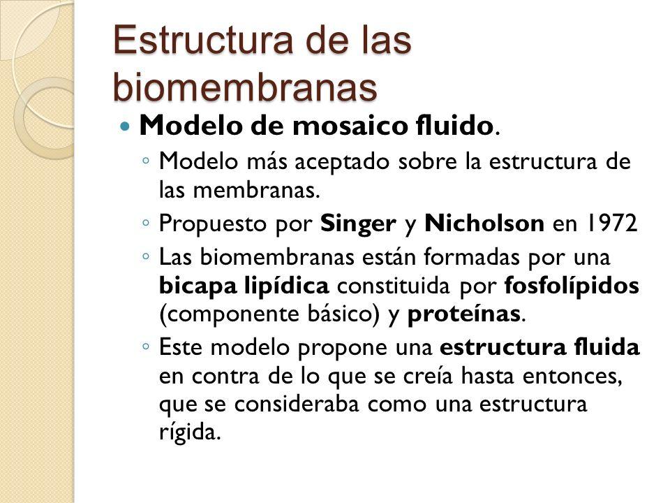 Estructura de las biomembranas