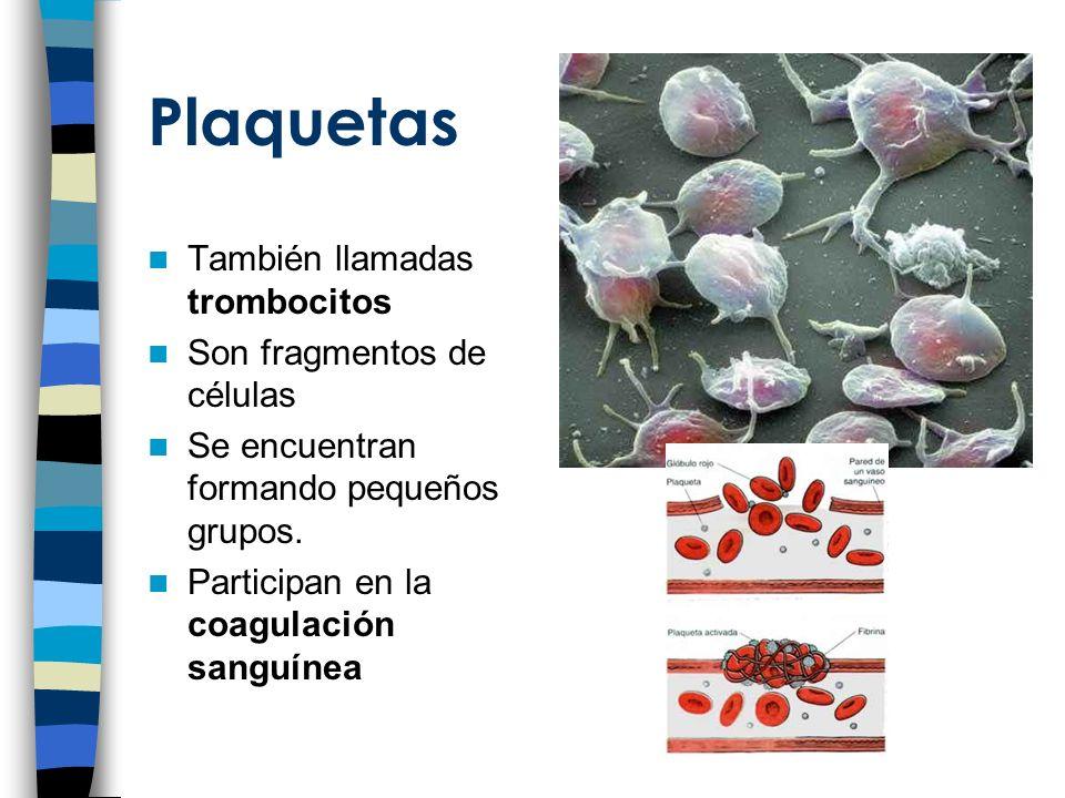Plaquetas También llamadas trombocitos Son fragmentos de células