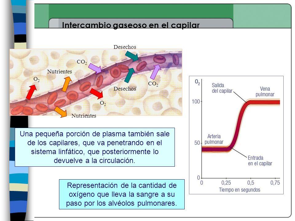 Intercambio gaseoso en el capilar