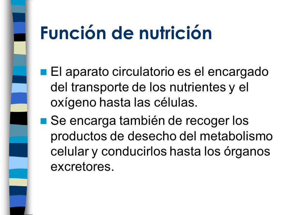 Función de nutrición El aparato circulatorio es el encargado del transporte de los nutrientes y el oxígeno hasta las células.