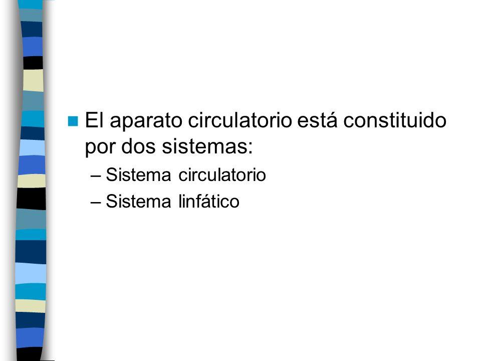 El aparato circulatorio está constituido por dos sistemas: