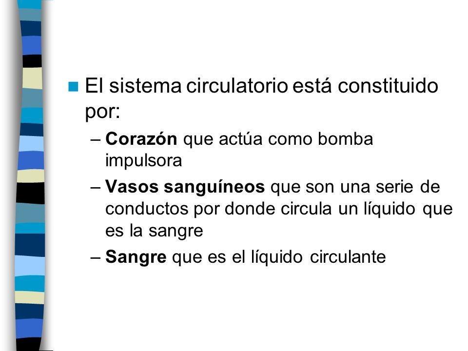 El sistema circulatorio está constituido por: