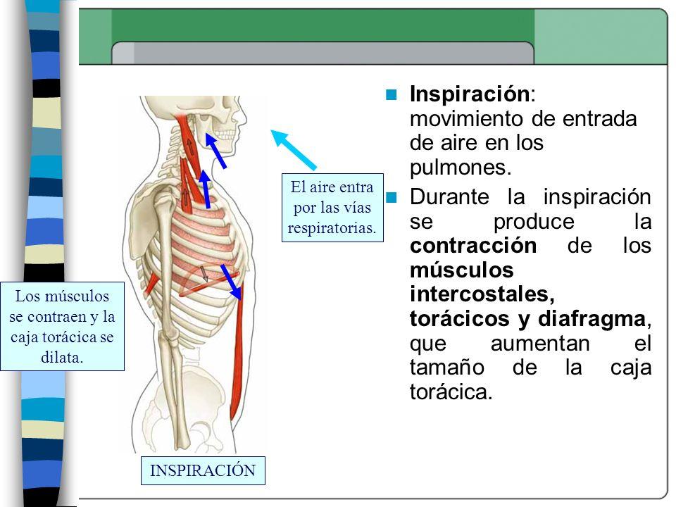 Inspiración: movimiento de entrada de aire en los pulmones.