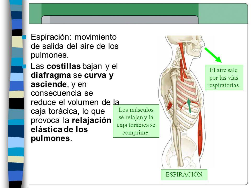 Espiración: movimiento de salida del aire de los pulmones.