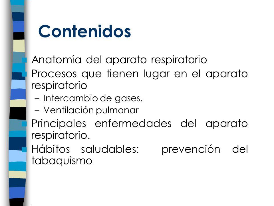 Contenidos Anatomía del aparato respiratorio