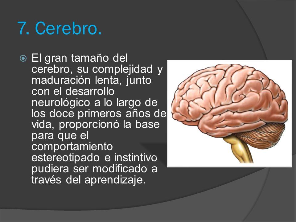 7. Cerebro.