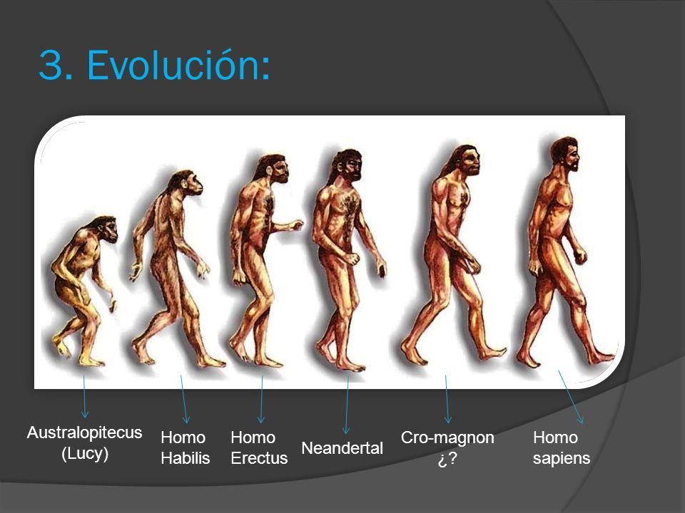 3. Evolución: Australopitecus (Lucy) Homo Habilis Homo Erectus