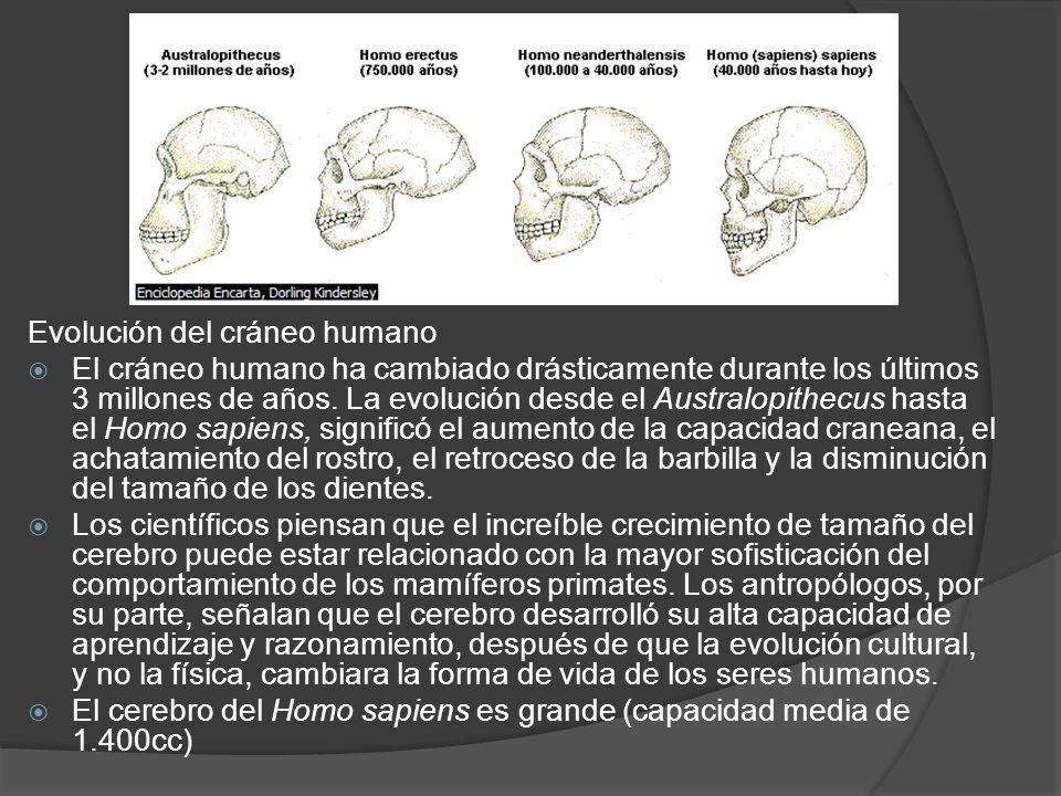 Evolución del cráneo humano