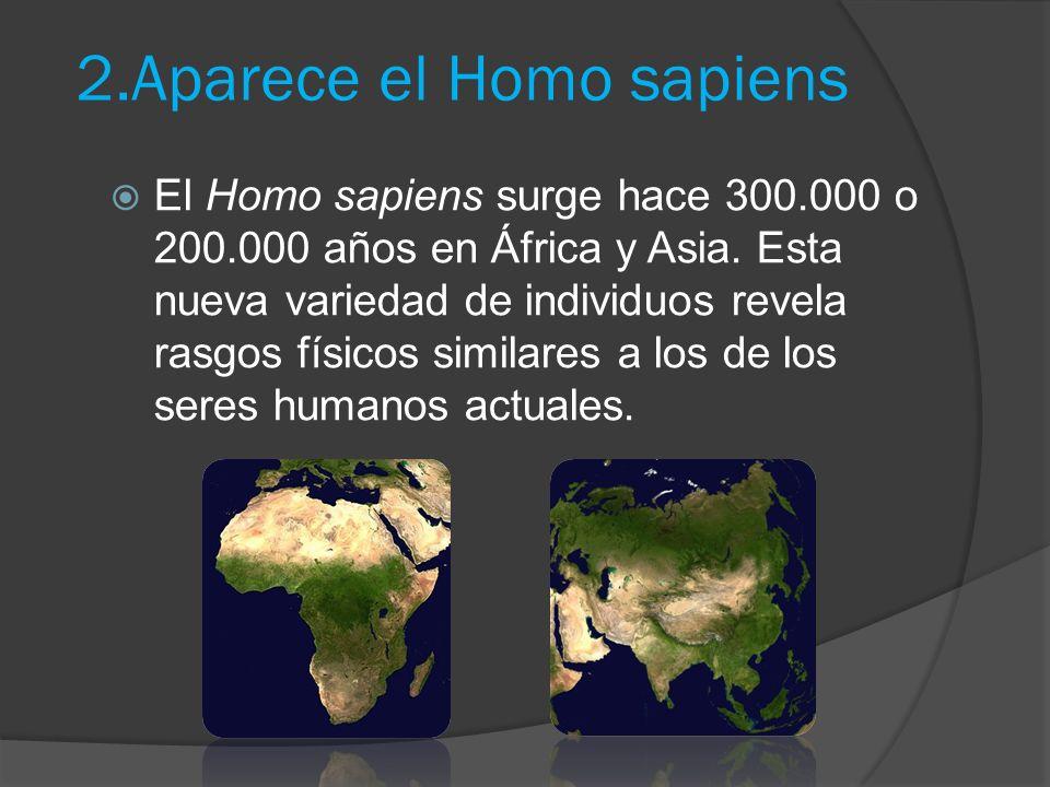 2.Aparece el Homo sapiens