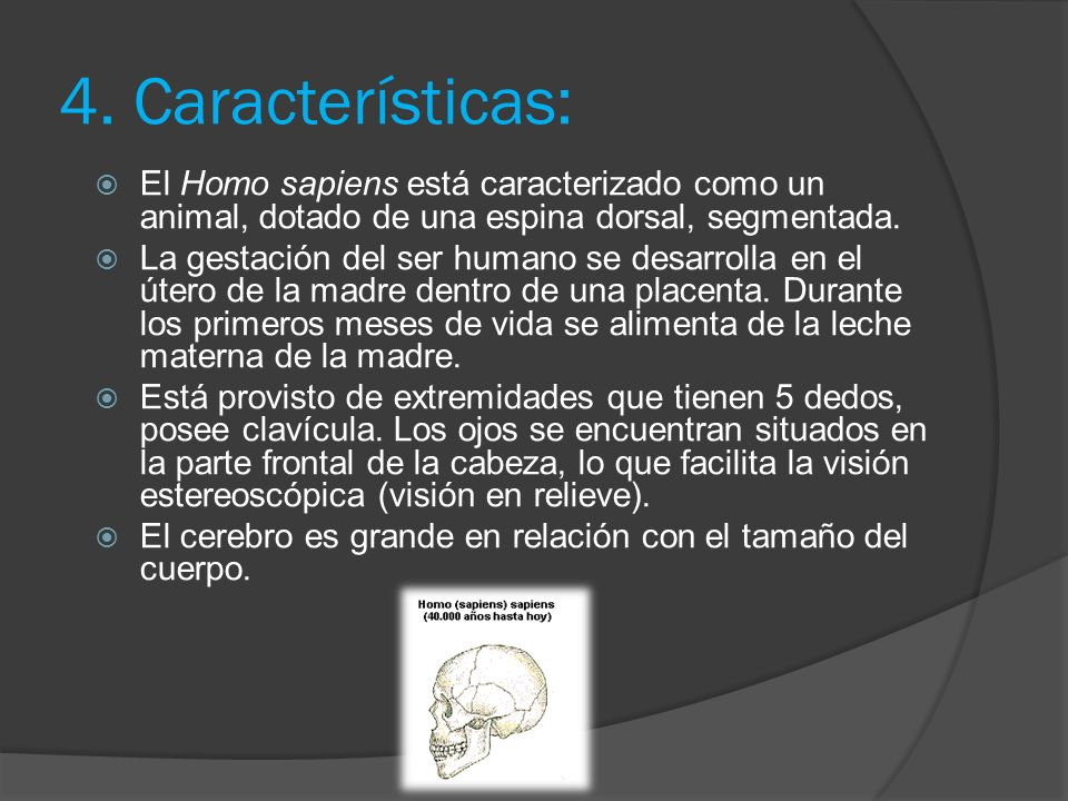 4. Características: El Homo sapiens está caracterizado como un animal, dotado de una espina dorsal, segmentada.